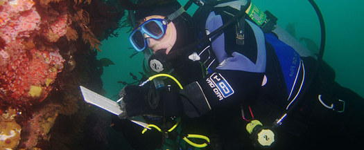PHOTO: A volunteer survey diver in the Monterey Bay National Marine Sanctuary. Credit: Pete Naylor.