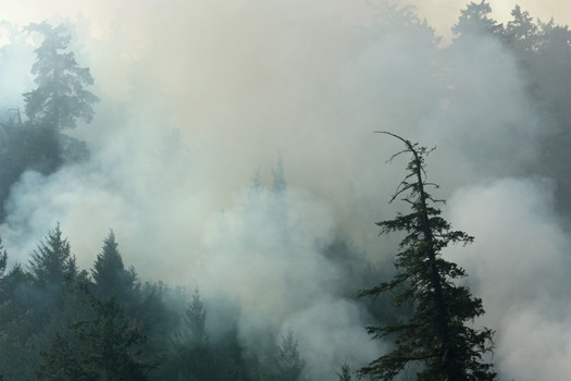 "PHOTO: The U.S. Forest Service is returning to its decades-old policy of letting some backcountry fires burn naturally, instead of ""fighting all fires."" Photo credit: Deborah C. Smith"