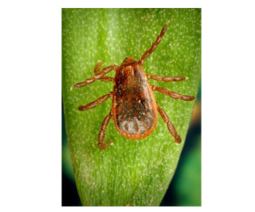 PHOTO: Tick season is underway in Idaho, with veterinarians reporting that people are already finding them on their pets. Pictured is a brown dog tick, courtesy of CDC.