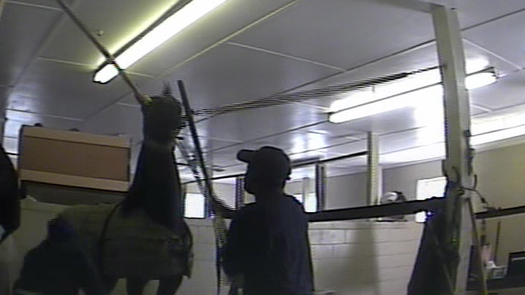 """PHOTO: The Humane Society says the """"ag-gag"""" bill would hamper investigations like the one in 2011 that captured nationally recognized walking horse trainer and his associates brutally beating horses and using painful chemicals on their legs. CREDIT: HSUS"""