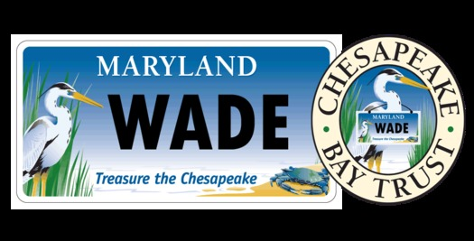 "GRAPHIC: The Chesapeake Bay Trust announces ""Wade"" is the winner of its ""name our bird"" contest. Courtesy Chesapeake Bay Trust."