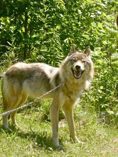 Florida Blue Medicare >> Beech Mountain Wildlife Sanctuary Debate Continues ...