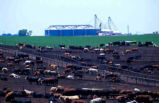 PHOTO: The EPA and Chesapeake Bay Foundation are announcing a deal to reduce pollution from animal feedlots in the Chesapeake Bay region. Photo credit: EPA