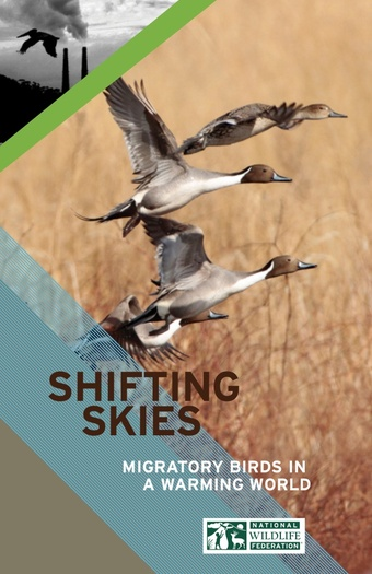 GRAPHIC: A new report from the National Wildlife Federation says climate change is a threat to migratory birds, many of them iconic species that travel through or spend summers in New England. Courtesy NWF