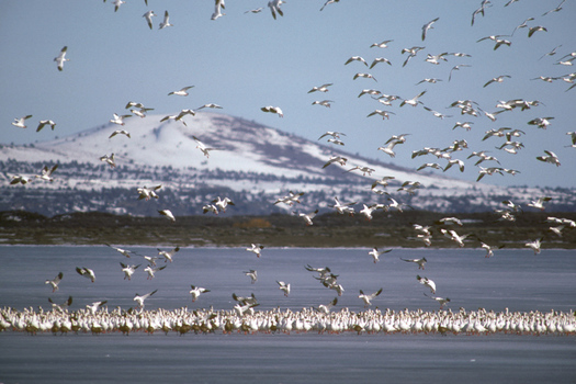 PHOTO: A new report says migratory birds are having a tough time adjusting to a changing climate. Courtesy of U.S. Fish & Wildlife Service.