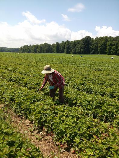FOTO: Trabajador agr�cola en el campo.