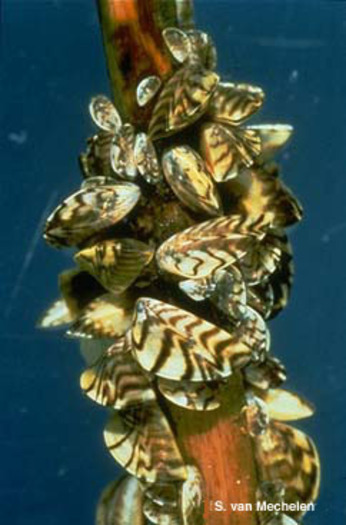 The National Wildlife Federation says stricter rules are needed to keep more zebra mussels out of Wisconsin waterways.
