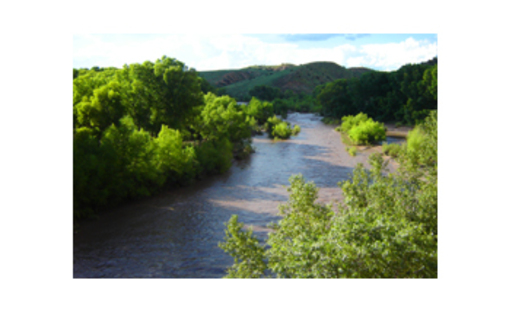 PHOTO: Gila River in summer. The water level of the Gila River, a tributary of the Colorado River, has New Mexicans concerned for the long-term health of the waterway. Courtesy of: Dennis O'Keefe
