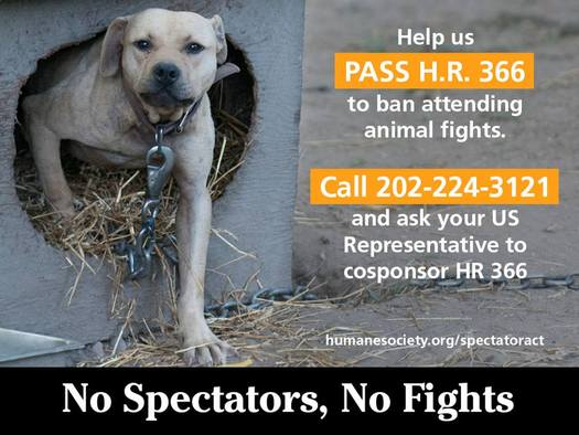 PHOTO: The Humane Society of the United States is trying to build support for legislation to make it a crime to attend an animal fight. Photo credit: HSUS