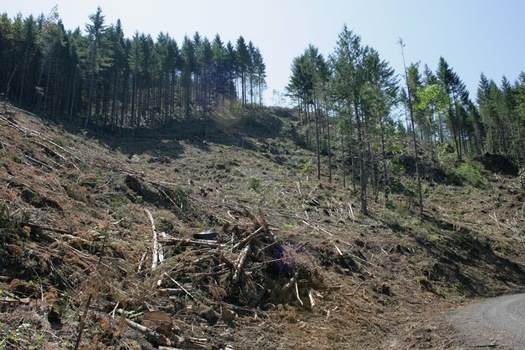 PHOTO: Environmental groups warn that HR 1526 would return Western forests to the days of clear-cutting to bring in money for counties � an approach they say is short-sighted. Photo credit: Chandra LeGue.