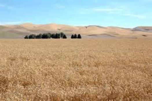 PHOTO: The Utah Farmer's Union calls congressional delay in passing a new Farm Bill