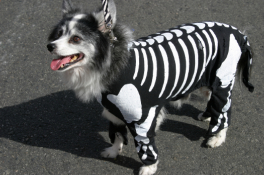 "PHOTO: This Halloween, the most important part of your pet's ""costume"" is a collar and ID tag. Photo credit: iStockphoto.com."