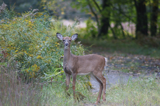 PHOTO: A report from the National Wildlife Federation warns that the effects of climate change could put the future of the state's treasured big-game wildlife at risk. Photo credit: U.S. Forest Service