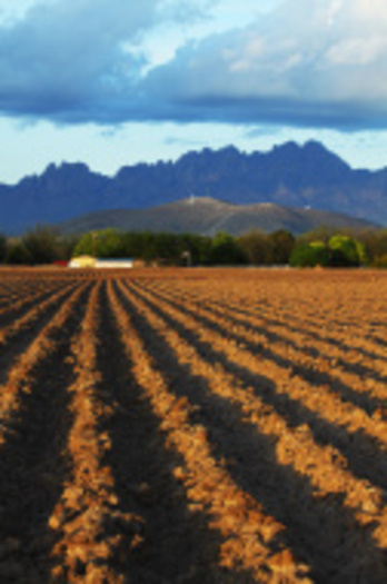 PHOTO: New Mexico's agricultural community would probably be a lot more thankful this holiday season if Congress would pass a new Farm Bill. Photo credit: iStockphoto.com.