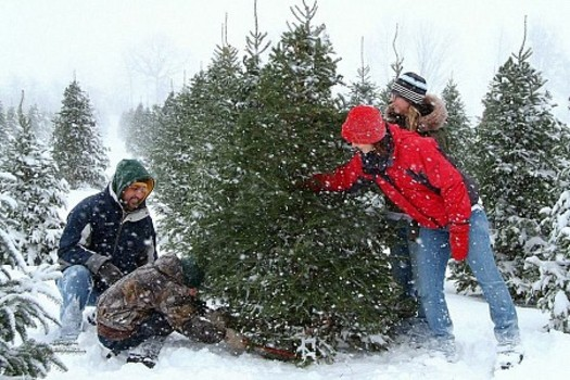 PHOTO: Selecting a family Christmas tree is more than just a chance for making memories, say Michigan tree farmers. It also helps the state's economy. Photo courtesy MCTA.
