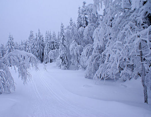 Heavier than normal snowfalls could be one affect of climate change. Photo by: Randi Hausken