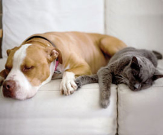 Holiday food and decor can be dangerous for pets. Photo courtesy of the HSUS.