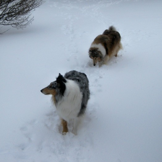 PHOTO: Animal experts say this bitter cold snap can be very hard on pets, and they need to be carefully monitored when outside. Photo credit: Tim Morrissey.