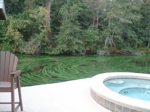 Photo: Green slime covers the St. Johns River in Jacksonville, taken on November 12, 2013. Courtesy: Ed Washington.