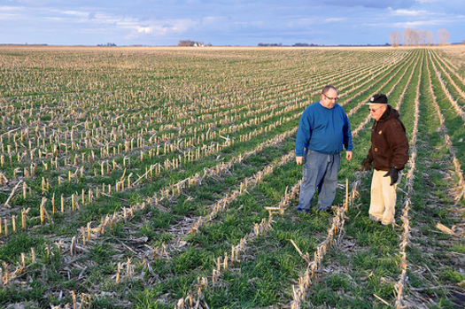 PHOTO: As more farmers across the state and the country turn to cover crops, the latest trend of mixing species can have an even greater impact. Photo credit: Natural Resources Conservation Service.
