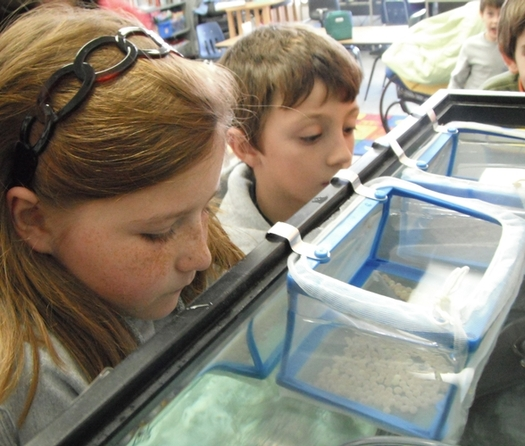 "PHOTO: The ""Trout in the Classroom"" program allows students to observe the growth of trout from eggs to fingerlings. Photo courtesy Dan River Basin Assn."