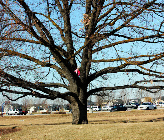 PHOTO: A long-held belief about old trees has been uprooted. A new study from the U.S. Geological Survey finds that trees' growth rates do not slow as they get older and larger � instead, they keep putting on mass along with their years. Photo credit: Deborah C. Smith