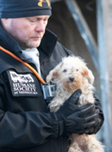 PHOTO: Investigators from the Missouri Humane Society were called in to rescue 135 dogs, including this one, from a breeder who voluntarily closed his facility. The dogs will be eligible for adoption after the proper care and assessments. Photo courtesy Humane Society of Missouri.