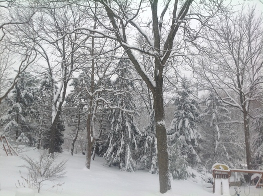 PHOTO: Michigan's worst winter in more than a century has taken a physical and emotional toll on the state's residents, and doctors say while some will feel better as longer days and warmer temperatures hopefully set in, others could need to seek professional help. Photo courtesy of M. Shand.