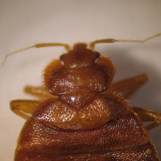 Expert Weighs In On Ohios Bed Bug Epidemic Public News