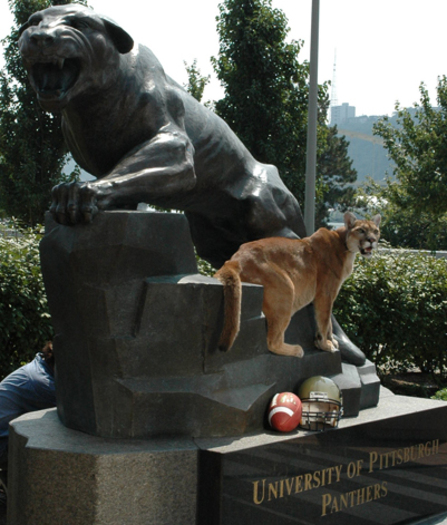 PHOTO: Roc Panther, the University of Pittsburgh's mascot, stands on the panther statue on campus. The panther is one species cited in a National Wildlife Federation report about how climate change is affecting wildlife species. Photo credit: University of Pittsburgh