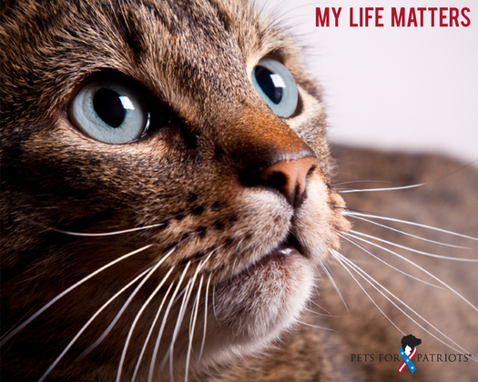 PHOTO: Last-chance pets are finding forever homes with our nation's heroes, with the help of some creative match-making. Photo courtesy PetsForPatriots.org