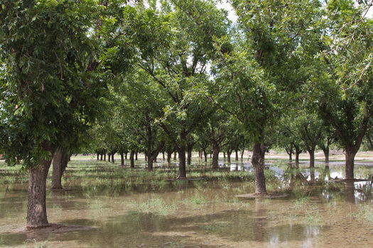 PHOTO: New Mexico's huge pecan harvest is a bright spot as the state suffers through extreme drought conditions. Photo courtesy of the National Oceanic and Atmospheric Administration.
