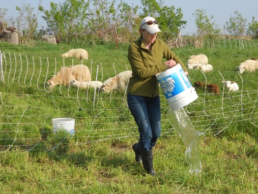 PHOTO: A new rule clarifying where the Clean Water Act applies seems to be drawing a lot of support from farmers such as Steph Larsen, seen here watering her sheep. Photo courtesy of Larsen.