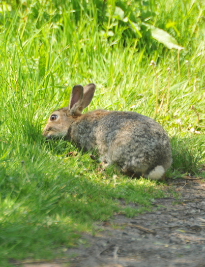 PHOTO: Bunnies are a symbol of the season, but animal welfare personnel caution parents considering bringing one home for Easter to make a thoughtful decision that is best for the animal and the family. Photo credit: morguefile.com user bobby.