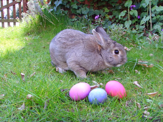 After Easter Hard Times for Bunnies and Chicks / Public News