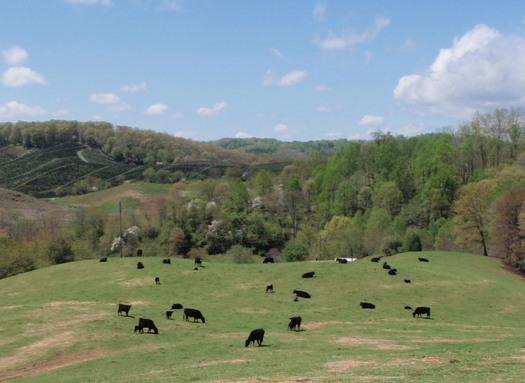 Photo: The National Committee for the New River worked with the Plummer Farm in Ashe County to place the farm under conservation easement in 2003. Courtesy: Blue Ridge Forever