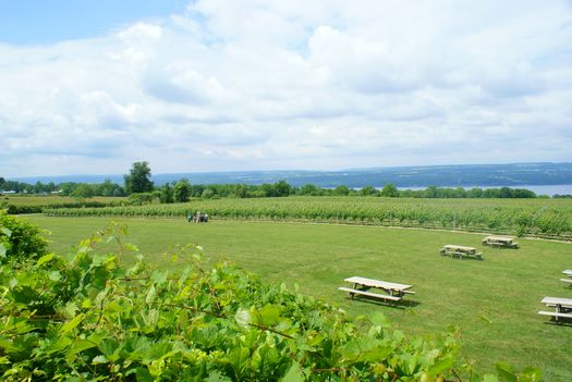 PHOTO: Vineyards near Seneca Lake and the tourism they attract are threatened by plans to expand and add oil and gas facilities on the western shore, according to opponents of the development. Photo credit: Tthass/Wikimedia Commons.