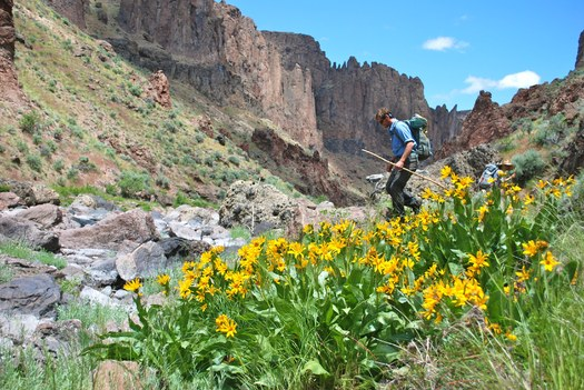 PHOTO: A hiker explores the West Little Owyhee River Canyon in southeast Oregon's Owyhee Canyonlands. An independent economic analysis says protecting the area could be a much-needed boost for the Malheur County economy. Photo credit: Tim Neville.Photo by Tim Neville