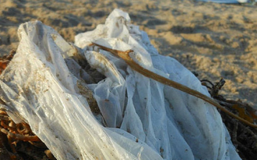 PHOTO: California is poised to become the first state in the U.S. to institute a statewide ban on single-use grocery store plastic bags. Advocates say the measure will help the environment and save tax dollars. Photo credit: Heal the Bay.