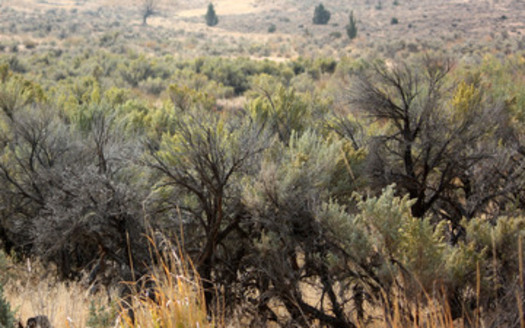The BLM is taking a new approach in managing sagebrush landscapes, based on plans crafted with local input. Credit: Deborah C. Smith