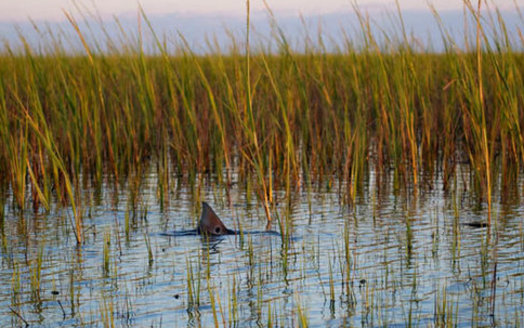 In the eight counties along North Carolina's seacoast, more than 33,000 people were employed in the tourism industry, generating more than $295 million in state and local revenue, according to the Outer Banks Chamber of Commerce. (Outerbanksfishing.org)
