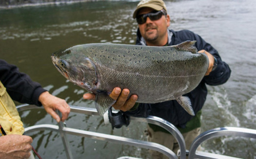 Northwesterners are concerned salmon fishing could be a dying industry if historically low return rates continue. (Nan Palermo/Flickr)