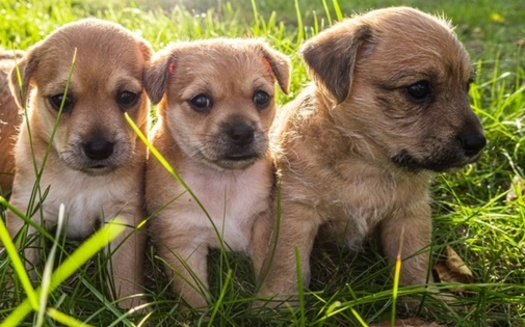 It's estimated that one female dog and her puppies can result in the births of 67,000 dogs in just six years. (Adobe Stock)