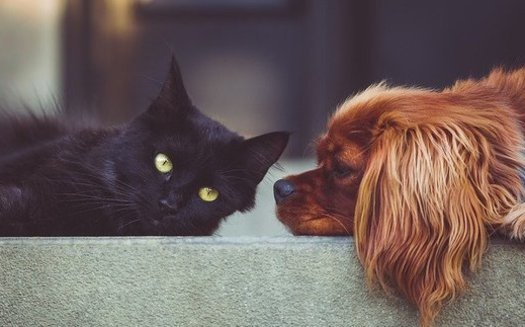 In a survey, nearly one-in-four Ohio pet owners indicates having difficulty affording a pet. (Stocksnap/Pixabay)
