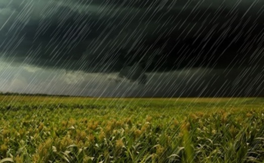 More frequent heavy rainfalls are posing challenges for growers in Indiana. (Adobe Stock)