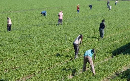 Groups are pushing for guest worker visa reforms that would prevent farm labor contractors from exploiting workers brought to the United States. (Adobe Stock)