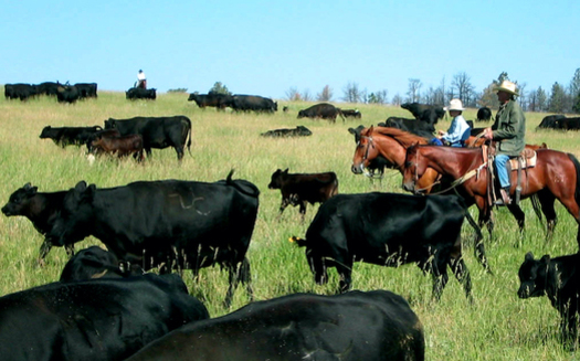 Montana ranchers say they've taken a hit because the United States lacks accurate country-of-origin labeling. (Northern Plains Resource Council)