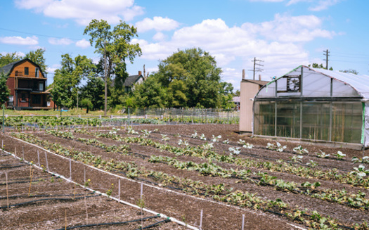 The Detroit Black Community Food Security Network is reimagining ways to grow food in cities, inspired by urban gardens in the 1960s and 70s. (espiegle/Adobe Stock)
