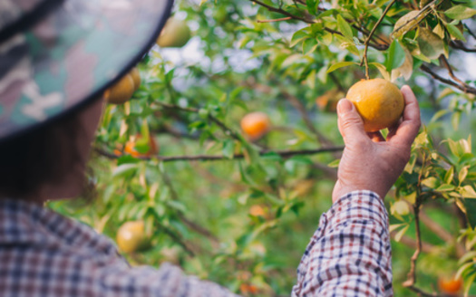 In the most recent National Agricultural Workers Survey, 23% percent of farmworkers said they haven't sought medical care because the cost is too high. With economic hardship of COVID-19, that number has likely increased. (Adobe Stock)
