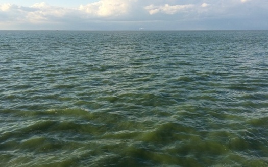 Toxic algae blooms driven by excess nutrients give the waters of Lake Erie a greenish hue. (Adobe Stock)
